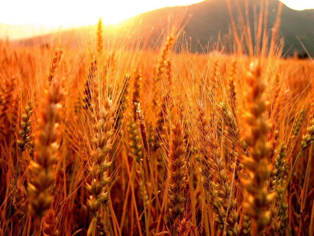 З початку поточного сезону Україною експортовано понад 25 млн тонн зернових